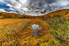 大沼の池塘