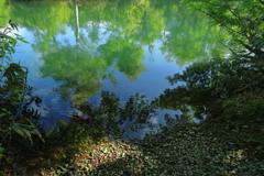 六月の地蔵沼