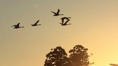 日の出と白鳥