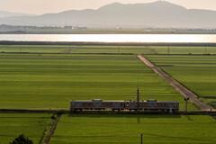 夏の水田列車