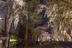 角館夜桜 Ⅵ