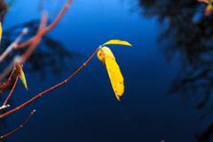 大沼 黄葉