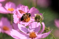 花粉にまみれ 1