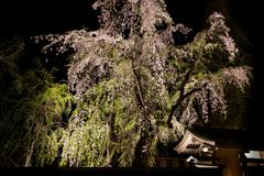 角館夜桜 屋敷内