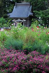 三浦館 花と社殿
