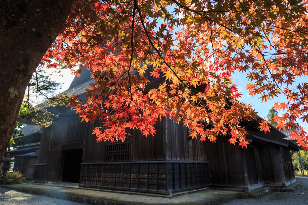 紅葉の三浦館