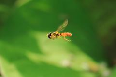 とても小さな蜂