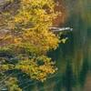 Lae  Autumn