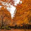 旭川ダム公園の秋