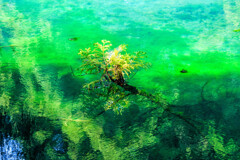 池中の一木