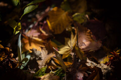 秋色コレクション