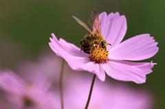 花粉にまみれ 2