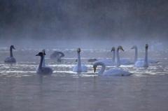 小泉潟初冬