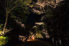 角館夜桜 Ⅱ