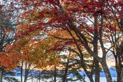 田沢湖 湖畔の紅葉