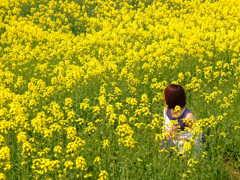 yukiと菜の花2