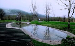 小さな池に魅せられて