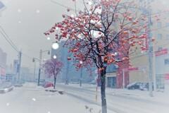 吹雪の街角