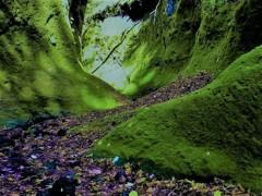 苔の回廊 弐