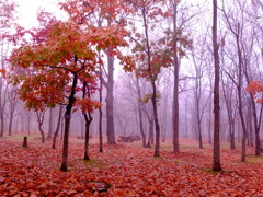 朝霧の公園で