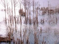 湖水の樹林