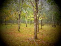 朝霧の公園