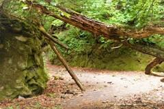 苔の回廊 壱
