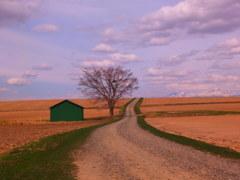 春の緑の小屋