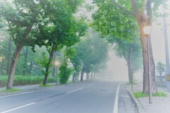 朝霧のロマンチック街道