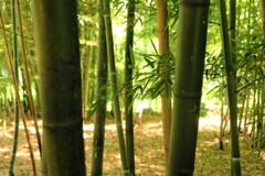 竹林に見る