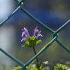 春 喜び 1
