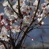 静かに春が 3