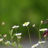 春 喜び 3