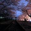 2015・桜めぐり②(インクライン・夜桜)