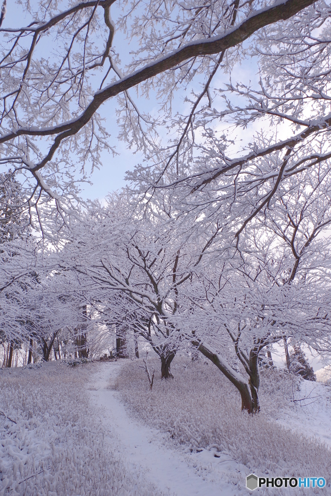 2020比叡初冠雪(つつじの丘付近)