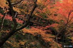 2017秋紅葉(永観堂1)