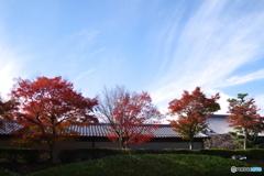2018紅葉(妙満寺2・駐車場より横参道沿いの紅葉)