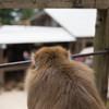 お猿の見る世界