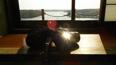 私のカメラとケース