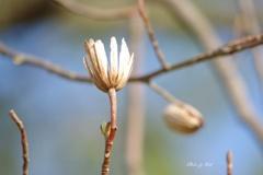 新たな芽吹き