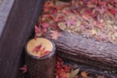 落葉の飾り