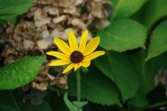 小さな一輪の花