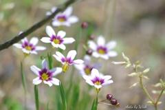 小さな草花
