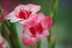 夏に咲く花々