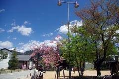春の飛騨古川