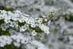 小粒の花々