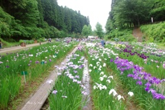 頼成の森 花菖蒲園の景色