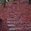 落葉の回廊