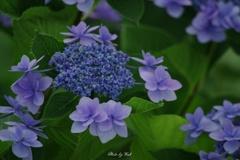 Blue&Blue
