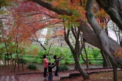 紅葉景色を楽しむ